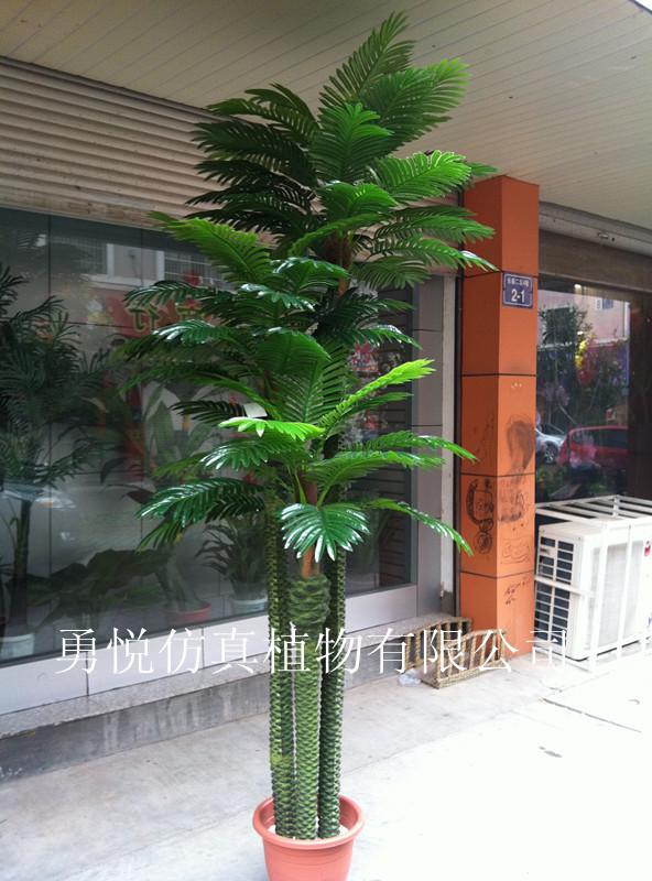 仿真葵树,珍珠葵,王子葵,凤凰葵,热带椰树,芭蕉树等