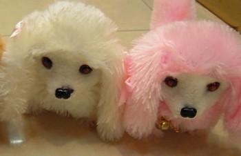 金巴狗 前進后退狗 模仿狗叫 多色混裝 眼睛發光 毛絨柔軟