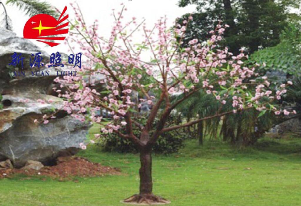 农村院子载桃树好不好
