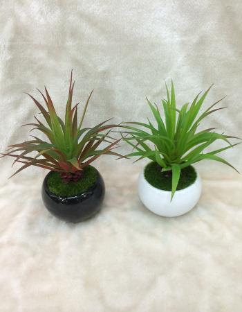 新款热带植物盆景 盆栽 家居必备品