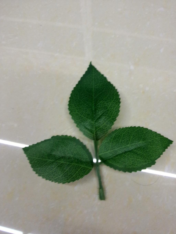 背景 壁纸 绿色 绿叶 树叶 植物 桌面 1024_1365 竖版 竖屏 手机