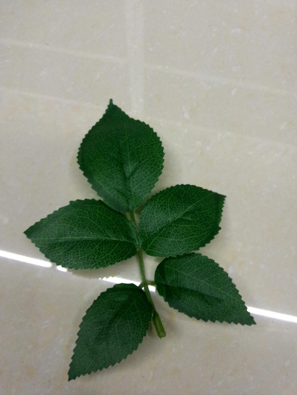 背景 壁纸 绿色 绿叶 盆景 盆栽 树叶 植物 桌面 1024_1365 竖版 竖屏