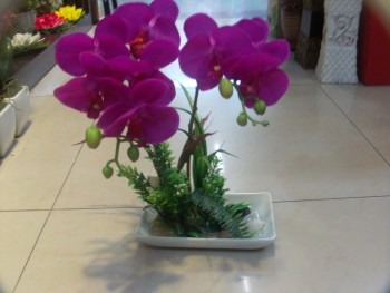 Simulation simulation of potted Phalaenopsis Orchid Phalaenopsis potted artificial flowers