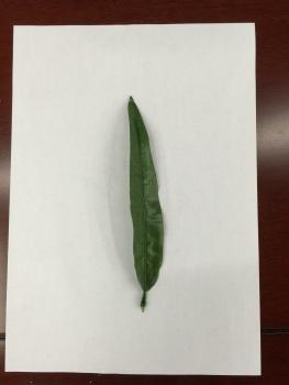 儿童手工制作竹叶贴画