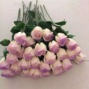 单支双色渐变香皂花玫瑰