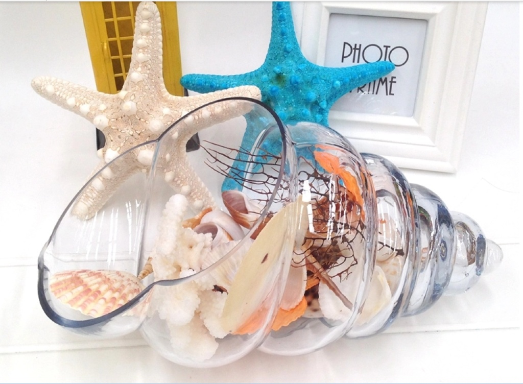 大海星贝壳大号天然海螺贝壳 鱼缸造景 卷贝鱼