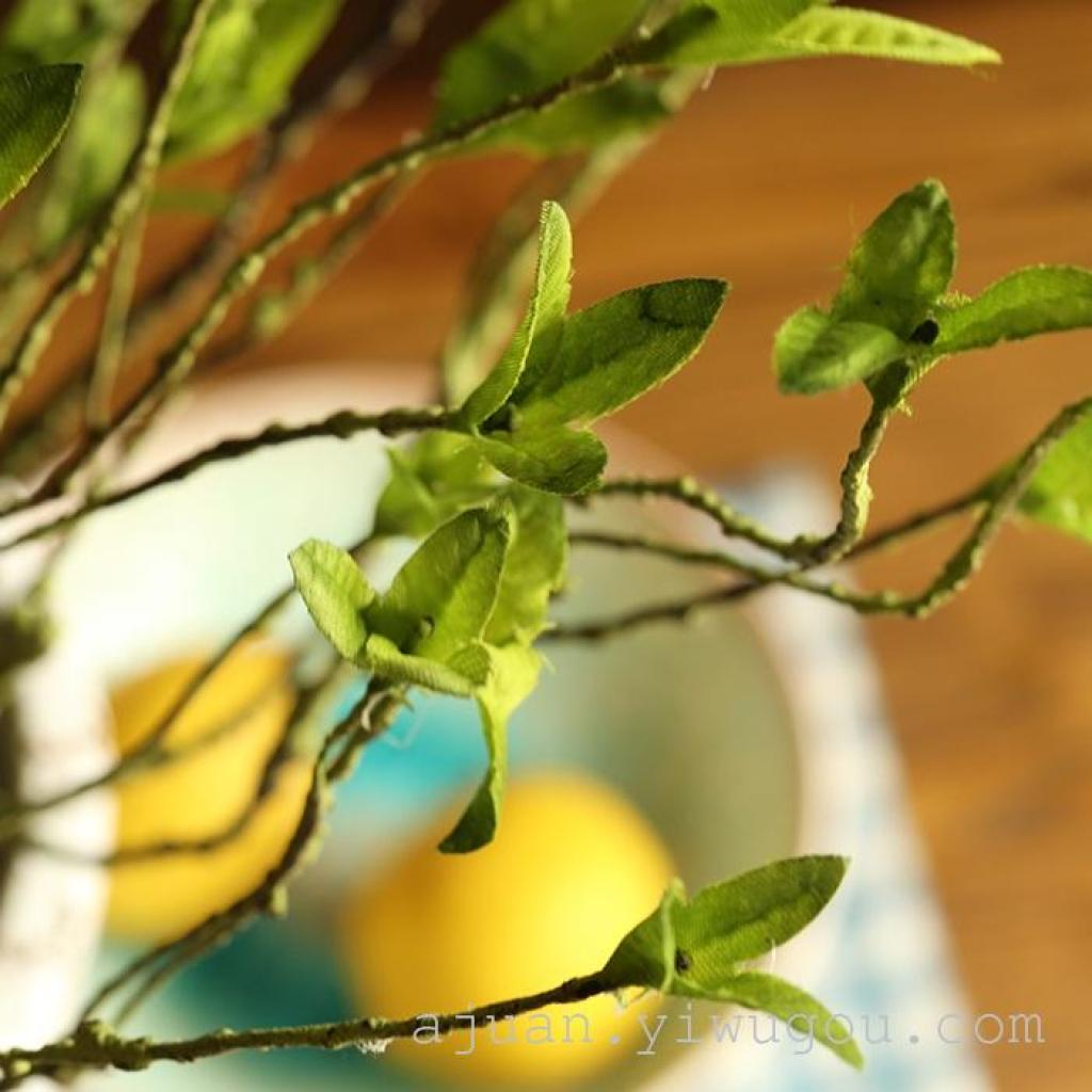 幼儿园树枝藤蔓