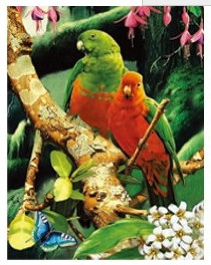 高清三维立体画装饰画墙画挂画发鸟类动物黑白鹦鹉立体画