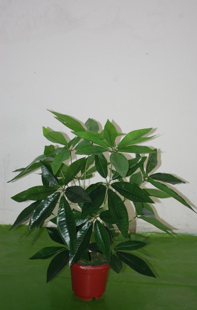 小盆栽发财树 手感布的叶子.仿真植物