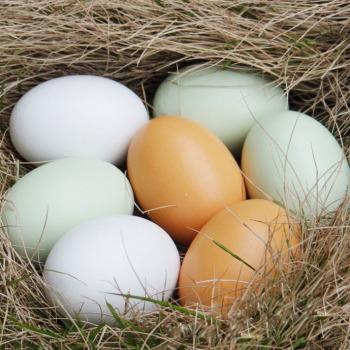 The wooden egg duck's egg children Easter eggs DIY model house toys