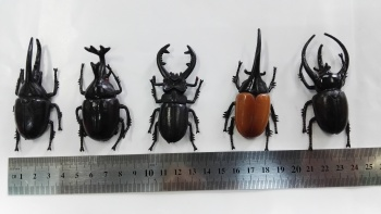 The simulation model of hot products toys beetle