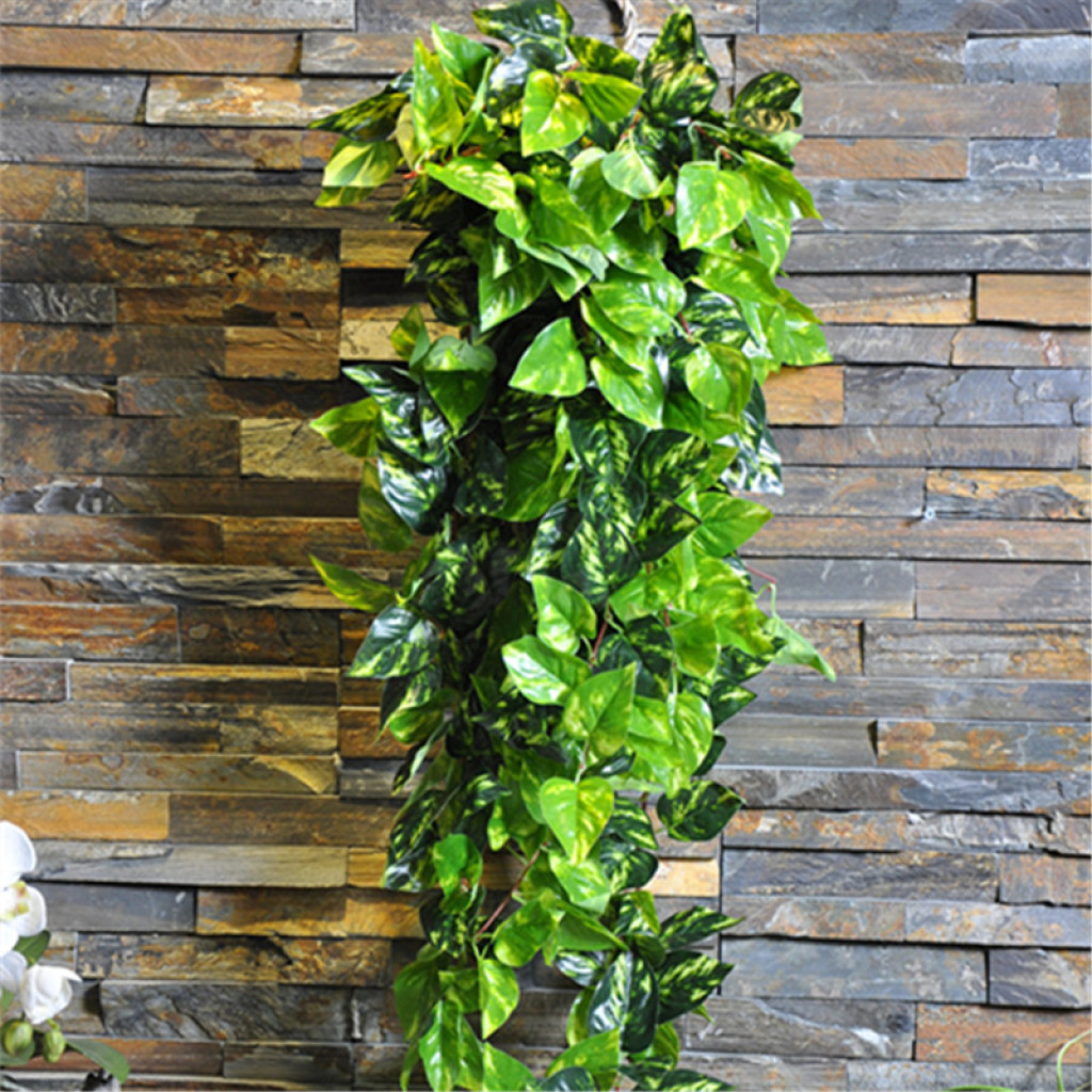 植物墙配材 厂家直销 过胶万年青壁挂