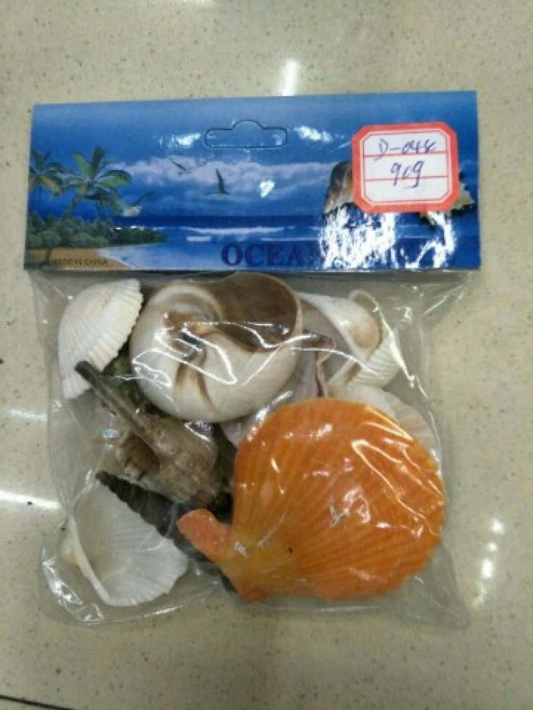 天然贝壳海螺