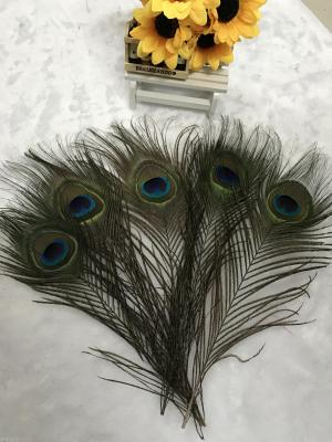Spot supply of high quality wool, feathers, peacock pheasant Turkey, ostrich hair