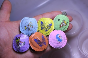 New cartoon colorful turtle living in Brazil watch color small turtle stall pet breeding