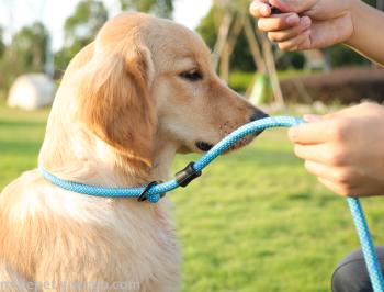 嘜迪Midepet 寵物圓繩P鏈 工廠直銷